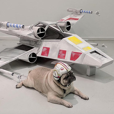 Doggie X-Wing Fighter